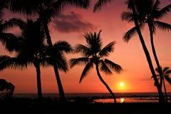 Puesta del sol tropical hermosa fotografía de archivo libre de regalías