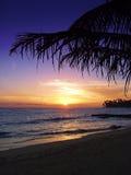 Puesta del sol tropical hermosa imagen de archivo libre de regalías