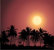 Puesta del sol tropical, silueta de la palmera Foto de archivo libre de regalías