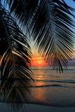 Puesta del sol tropical sobre la palmera Fotos de archivo