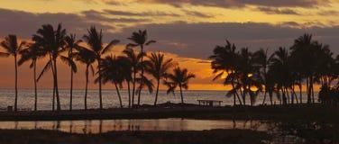 Puesta del sol tropical, visión panorámica Imágenes de archivo libres de regalías