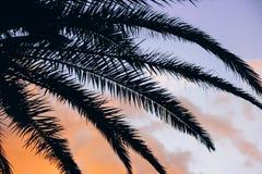 Puesta del sol tropical y fondo vivo de las hojas de palma fotos de archivo