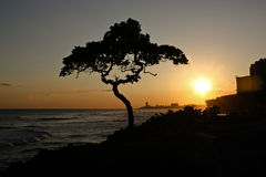 Puesta del sol V de la costa Foto de archivo