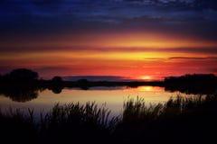Puesta del sol vibrante sobre una charca del pato enmarcada por las espadañas Fotografía de archivo libre de regalías
