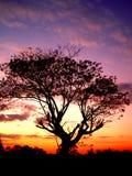 Puesta del sol y árbol 01 Fotos de archivo libres de regalías