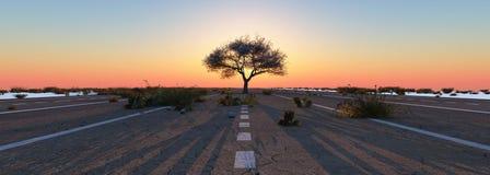 Puesta del sol y árbol Imagen de archivo libre de regalías