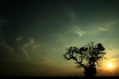Puesta del sol y árbol Foto de archivo libre de regalías