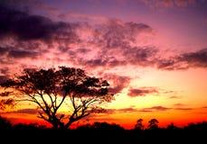 Puesta del sol y árbol Imágenes de archivo libres de regalías