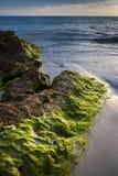 Puesta del sol y alga marina en la playa de Sarasota Fotografía de archivo