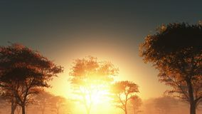 Puesta del sol y bosque en niebla
