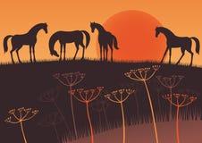 Puesta del sol y caballos Fotos de archivo libres de regalías