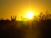 Puesta del sol y cactus Imágenes de archivo libres de regalías