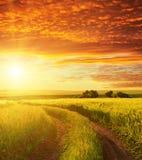 Puesta del sol y camino en campo verde Fotos de archivo libres de regalías