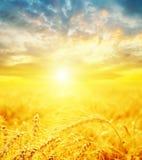Puesta del sol y cosecha de oro Fotografía de archivo libre de regalías