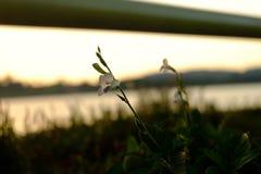Puesta del sol y flor Imágenes de archivo libres de regalías