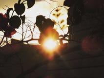 Puesta del sol y hojas coloridas Imágenes de archivo libres de regalías