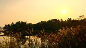 Puesta del sol y los campos Foto de archivo libre de regalías