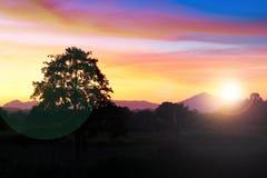Puesta del sol y luz Sun justo en hermoso colorido del cielo y de la nube con el árbol de la silueta en arbolado Imágenes de archivo libres de regalías