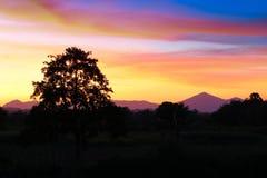 Puesta del sol y luz Sun justo en hermoso colorido del cielo y de la nube con el árbol de la silueta en arbolado Imagen de archivo