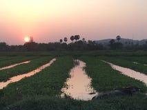 Puesta del sol y naturaleza de Phuket Tailandia imágenes de archivo libres de regalías