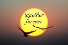 Puesta del sol y pájaros con junto para siempre el texto imagen de archivo libre de regalías