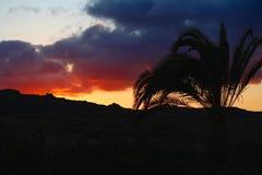 Puesta del sol y palma imágenes de archivo libres de regalías