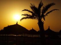 Puesta del sol y palmera Fotos de archivo