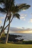 Puesta del sol y palmeras Fotografía de archivo