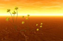 Puesta del sol y plantas Imágenes de archivo libres de regalías