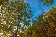 Puesta del sol y salida del sol hermosas de la isla del mentawai Foto de archivo