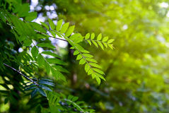 Puesta del sol y serbal-árbol Fotografía de archivo