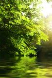 Puesta del sol y serbal-árbol Imágenes de archivo libres de regalías