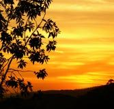 Puesta del sol y silueta del árbol Imagen de archivo