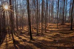 Puesta del sol y sombras en la madera de hayas Fotografía de archivo