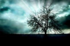 Puesta del sol y un árbol imagenes de archivo