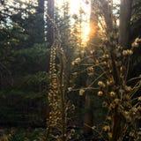 Puestas del sol suaves Fotos de archivo libres de regalías