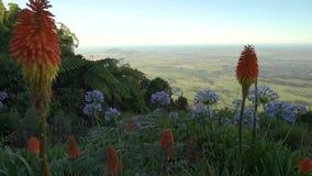 Puesto de observación de Cambewarra en el verano con las flores anaranjadas y azules en el primero plano, Australia metrajes