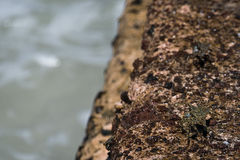 Puesto de observación del cangrejo de Camo fotos de archivo