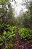Puesto de observación del punto, parque nacional de Nueva Inglaterra, AU Imagenes de archivo