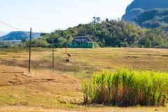 Puesto de observación en el valle de Vinales en Cuba en Cuba Imagen de archivo libre de regalías