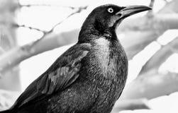 Puesto de observación negro del pájaro Fotografía de archivo