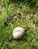 Puffball mushroom Stock Photos
