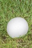Puffballpilz bedeckt im Tau Stockfoto