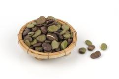 Puffbohne (Viciabohne, Fava Bean, Ackerbohne, Bell Bean oder Tic Bean) Stockbild