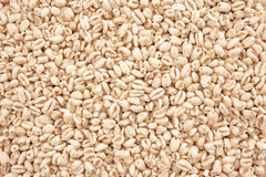 Puffed Wheat Cereal Royalty Free Stock Image