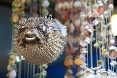 Puffer fish. Artifact made by the fisher in hong kong Royalty Free Stock Photo