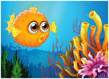 A puffer fish near the coral reefs. Illustration of a puffer fish near the coral reefs on a white background Royalty Free Stock Photography