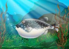 Puffer fish in under ocean. Illustration Stock Photos