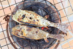 Puffer on the grill Royalty Free Stock Images