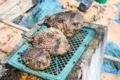 Pufferfish wurde oben vom Meer geholt Geblasen und getrocknet, um zu verkaufen stockfotografie